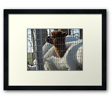 Lonely Brown Framed Print