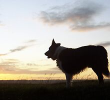 Indy at last light. by Michael Haslam
