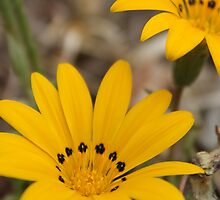 I Love Daisies by Jeannie26