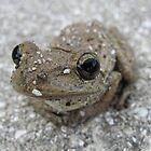 Brown Tree Frog by enyaw