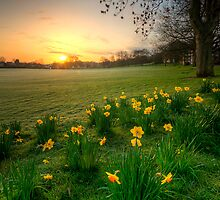 Daffodils & Sunrise At The Park by Yhun Suarez