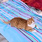 Purrfect-Share Your Towel? by Francis Drake