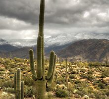 It Does Snow in the Desert by Saija  Lehtonen