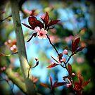 Spring 2012 by karolina