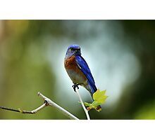 Blue Bird Brokeh Photographic Print