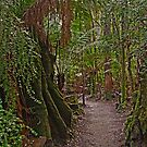 Rainforest Walk by TonyCrehan