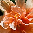 Peach Flower by Brenda  Meeks