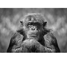 Chimp Photographic Print
