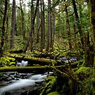 Green Is Best by Charles & Patricia   Harkins ~ Picture Oregon