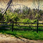 Country Fence by tanya breese