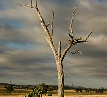 Dead Tree. (Bonshaw NSW) by Julia Ott