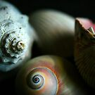 Shells - Color by Christopher Herrfurth