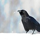 Frozen Drink - American Crow - Ottawa by Stephen Stephen