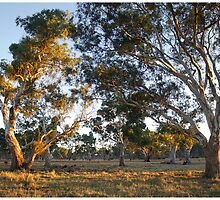 Morning on Wattle Heath Farm by George Petrovsky