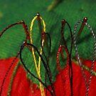 Needles and Thread by Robert Armendariz