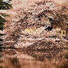 Sakura, Tokyo by Alan Black