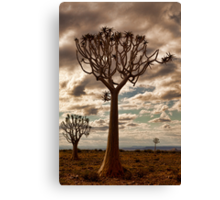 Quiver Trees Canvas Print