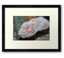 Kittens paw . Framed Print