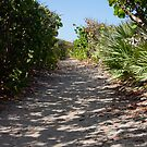 Path on the Dune Blowing Rock Preserve Florida by Henry Plumley