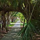 Tunnel of Palms Hobe Sound Florida by Henry Plumley