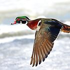 Colourful flight by Jim Cumming