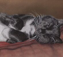 Cat Napping by Pam Humbargar