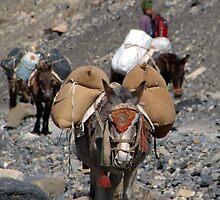 Mules Climbing Thorung La by SerenaB