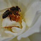 Summer honey bee by Karen01