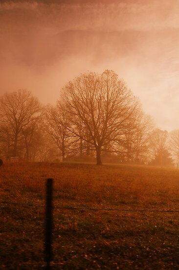 orange fog by Jamie McCall
