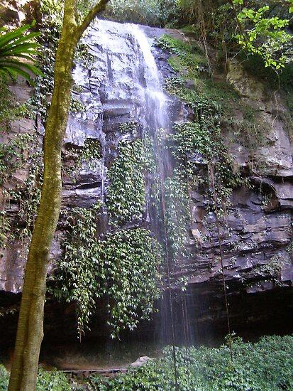 Pretty 'Crystal Falls', Rainforest, Dorrigo, N.South Wales.Aust. by Rita Blom