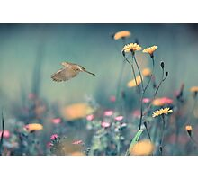When a Dove Flys Photographic Print