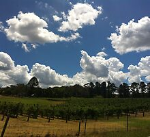 Zooming by the Barossa by Urszula Richards