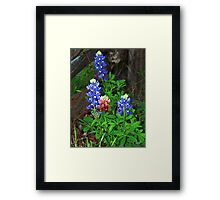 Texas State Flower ~Touch of Aggie Maroon Framed Print