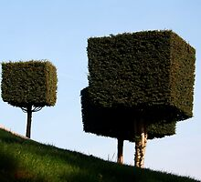 Disney Topiary 'Square Trees' by Andy Green