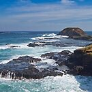 The Nobbies, Phillip Island, Victoria by Leanne Nelson