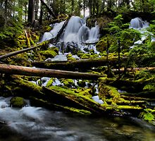 Green Is Not Enough by Charles & Patricia   Harkins ~ Picture Oregon