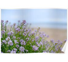 Sea Rocket on the beach. Poster