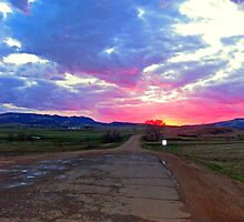 Road of color by Erika Price