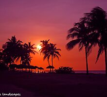 Palm silhouettes by Erykah36