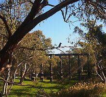 The Kookaburra sits in the old gum tree, Pyalong Vic Australia by Margaret Morgan (Watkins)