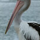 Pelican Portrait by Trish Meyer