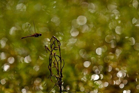 """WOoooooooohoo in mid flight  """" Sold One YAY """" by Nina  Matthews Photography"""