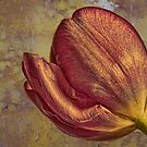 Copper Tulip by Wendi Donaldson