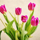 Cheerful Tulips by photecstasy