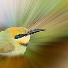 Rainbow Bee-eater  by Jenny Dean