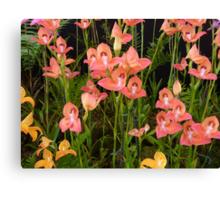 Peach Glasgow Orchids Canvas Print