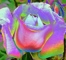Rose of a Different Color by LoneAngel
