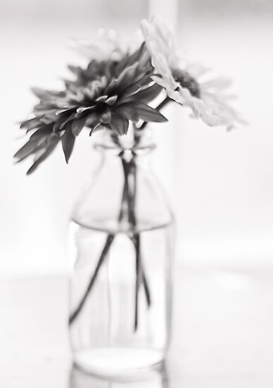 Untitled by Carina Potts