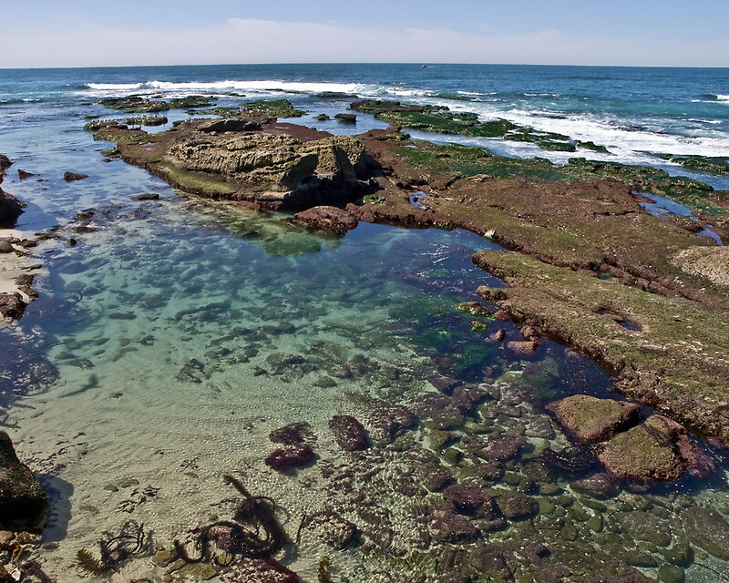 Quot La Jolla Tide Pools Quot By Joe Thill Redbubble