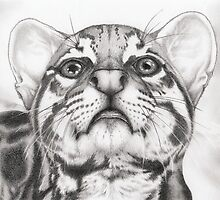 Ocelot by Immy Smith